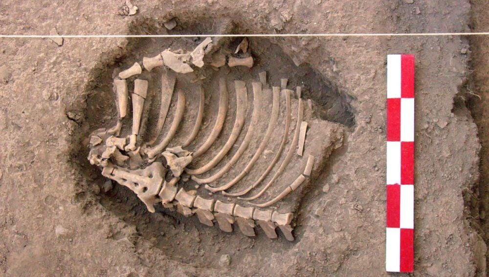 Descubren entierros más antiguos de la región peruana de Cusco