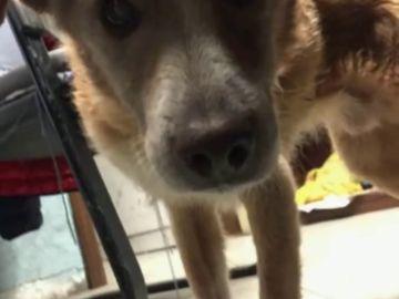 Un perro ciego perdido en el temporal en Italia se reencuentra con su dueño gracias a Facebook