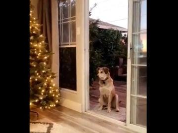 El perro Akela
