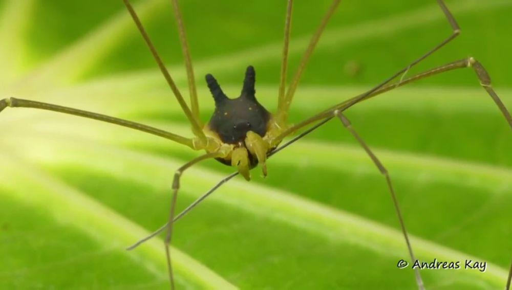 Un científico halla una 'araña' con cabeza de perro en la selva tropical de Ecuador