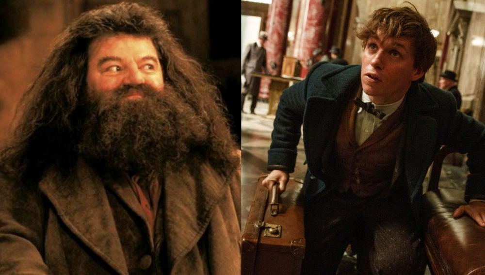 ¿Veremos juntos a Hagrid y Newt Scamander?