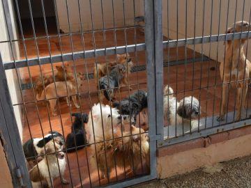 Algunos de los perros rescatados