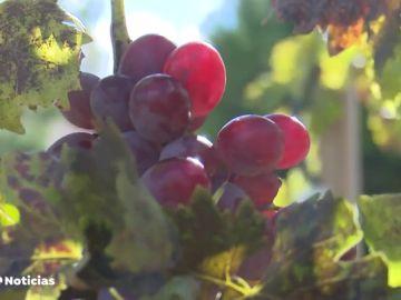 El vino más caro del mundo se produce en España y cuesta 25.000 euros