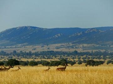 Defienden la caza en el área del Parque de Cabañeros