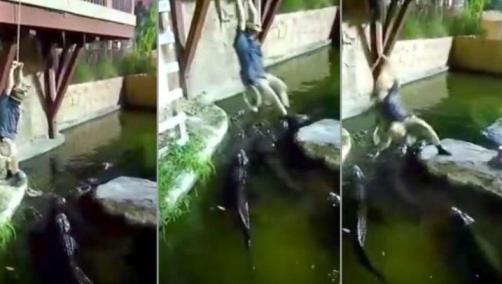 Michael Womer cae a un estanque con caimanes