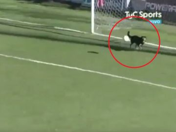 Un perro evita un gol