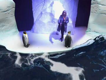 Madrid inaugura el primer acuario interactivo de Europa
