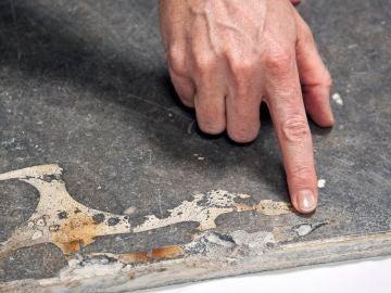 Fósil de vaca marina encontrado en Girona