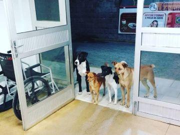 Los cuatro perros esperando en la puerta