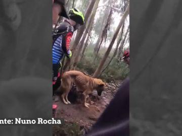 Un grupo de ciclistas rescata a un perro abandonado y atado a un árbol para que muriera de hambre