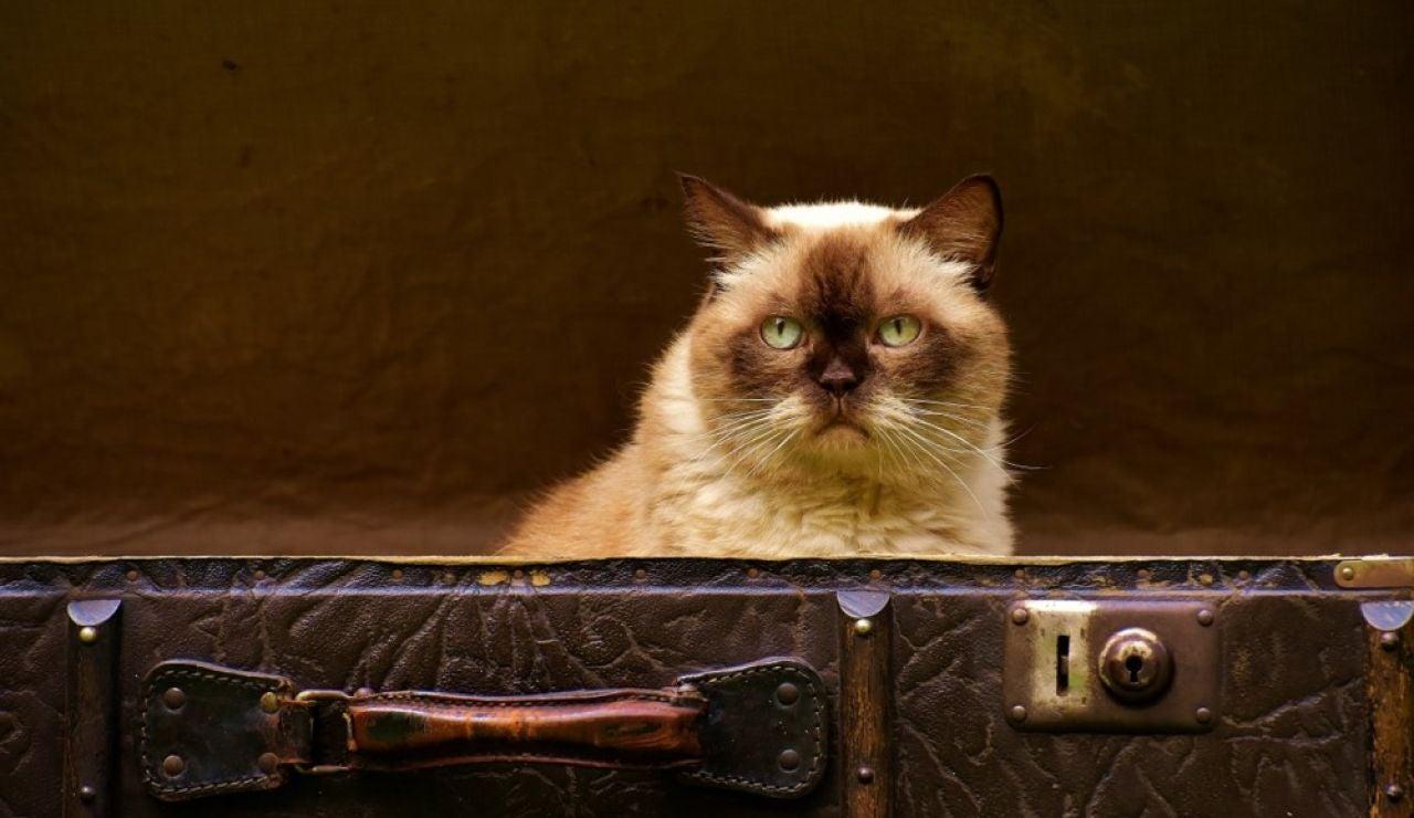 ¿como se puede viajar con nuestras mascotas?