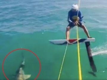 Un surfista choca con un tiburón