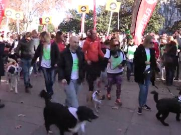 La San Perrestre, la carrera que junta a perros y dueños por Navidad