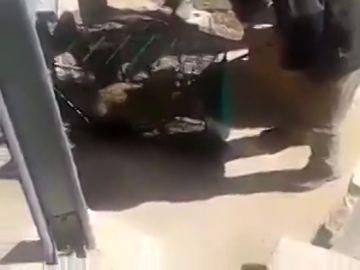 Un grupo de cazadores enjaulan a un zorro y lo liberan para acribillarlo a tiros