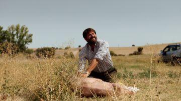 Un desesperado Francisco busca los cerdos marcados por Da Silva