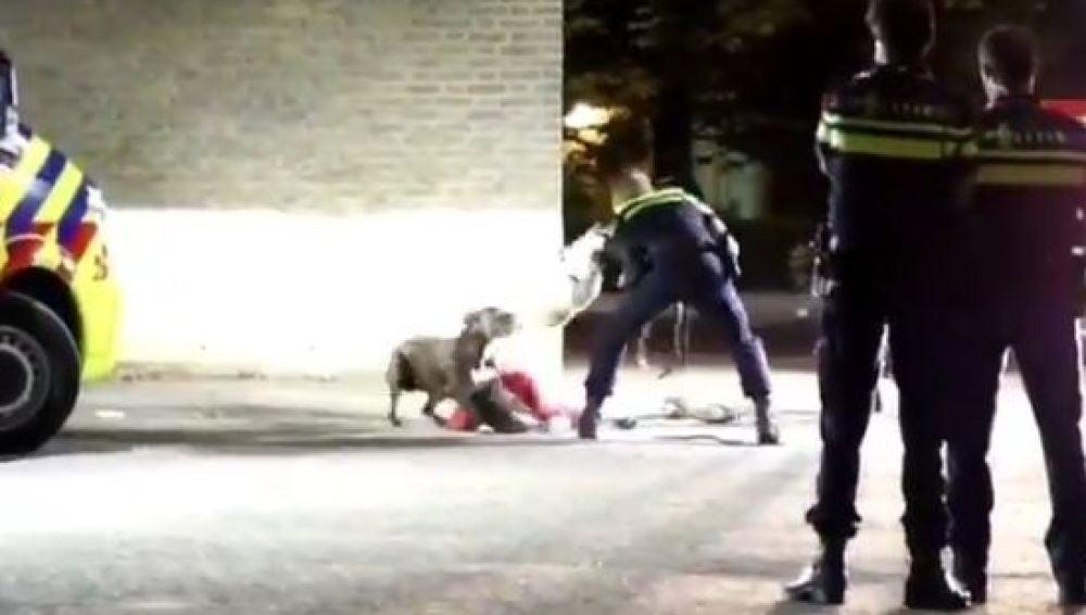 Los agentes consiguen calmar a un perro en Holanda