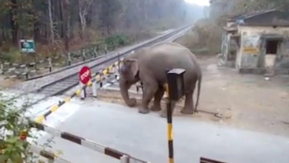 Elefante cruzando las vías del tren