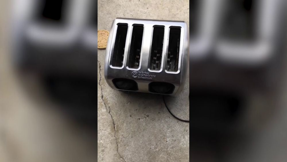 Serpiente escondida en una tostadora