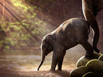 Cría de elefante y su madre (Archivo)