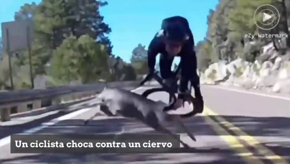Brutal caída de un ciclista en pleno descenso al chocar contra un ciervo