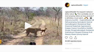 Impala y leopardo