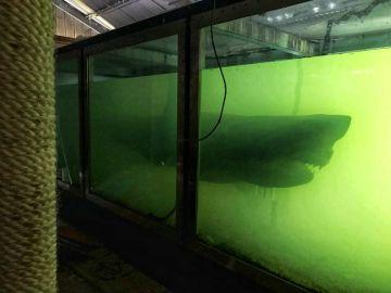 Tiburón abandonado
