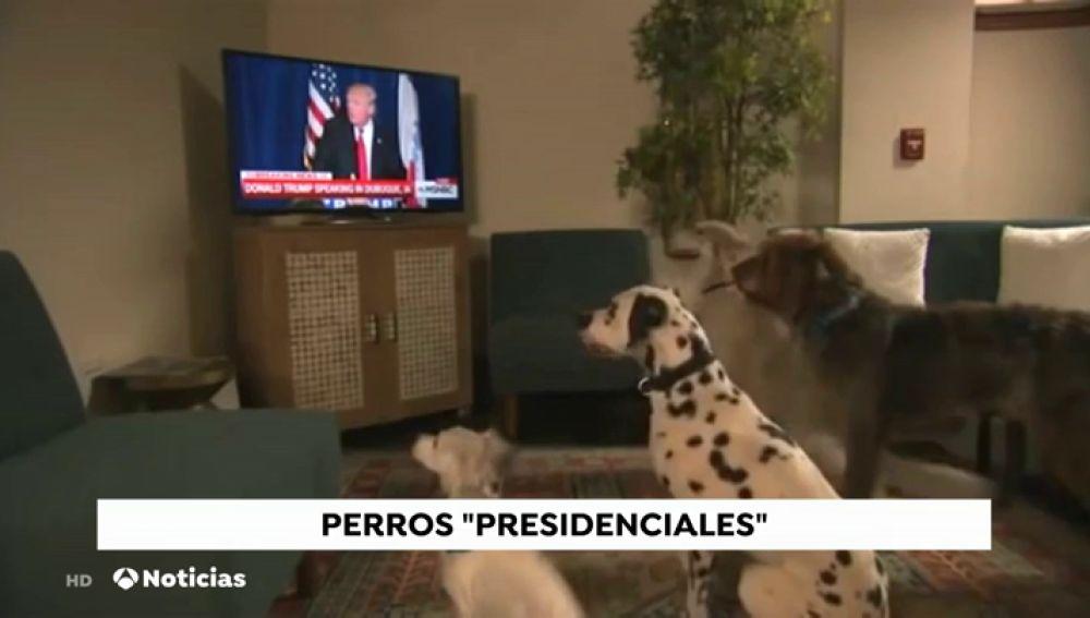 Donald Trump descarta tener perro a pesar del consejo de sus asesores