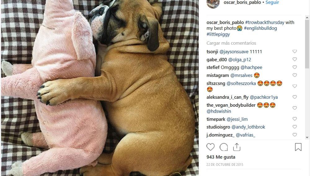Mascotas y sus juguetes