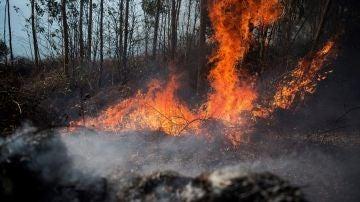 Medios aéreos se suman a la extinción del incendio de Ramales (Cantabria)