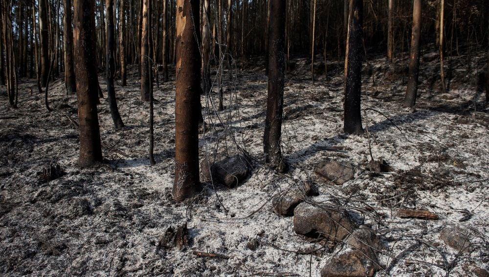 Un monte quemado tras un incendio en los montes próximos a la localidad cántabra de Ramales de la Victoria