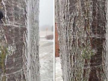 Agua corriendo dentro de un árbol