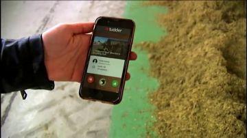 Tinder llega al mundo animal: crean una aplicación de ligoteo para vacas
