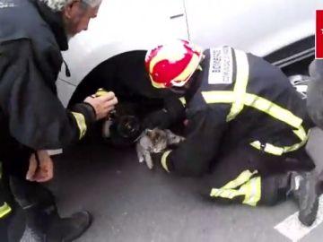 El delicado rescate de un gato atrapado dentro del capó de un vehículo