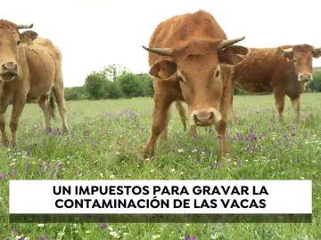 Los pedos de las vacas bajo impuesto: Bruselas plantea que los gases de las reses acaben pagando impuestos