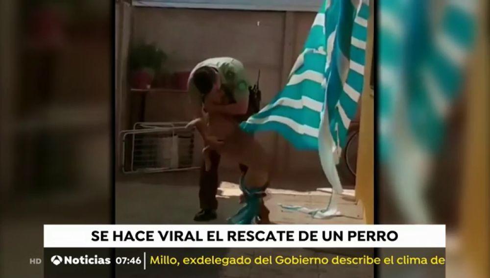 RESCATE PERRO CHILE