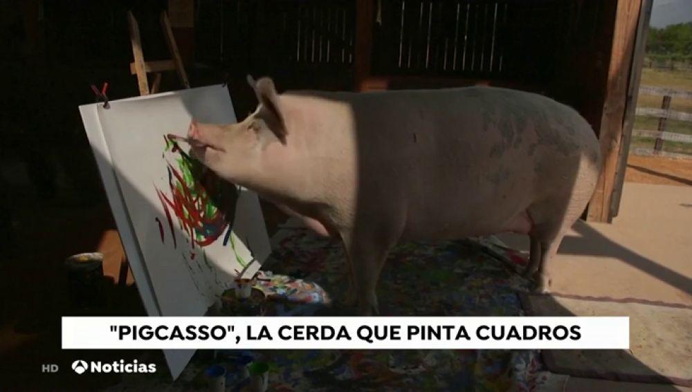 REEMPLAZO Así es 'Pigcasso', la cerdita que pinta cuadros por valor de 3.500 euros