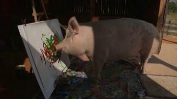 Así es 'Pigcasso', la cerdita que pinta cuadros por valor de 3.500 euros