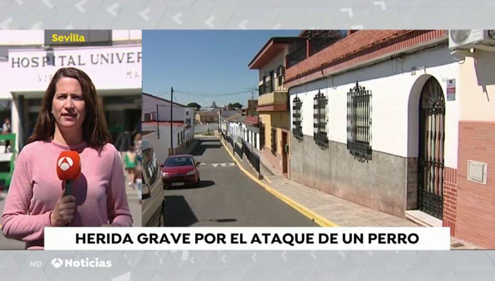 Herida grave una mujer tras ser atacada por un perro de raza peligrosa en Gerena (Sevilla)