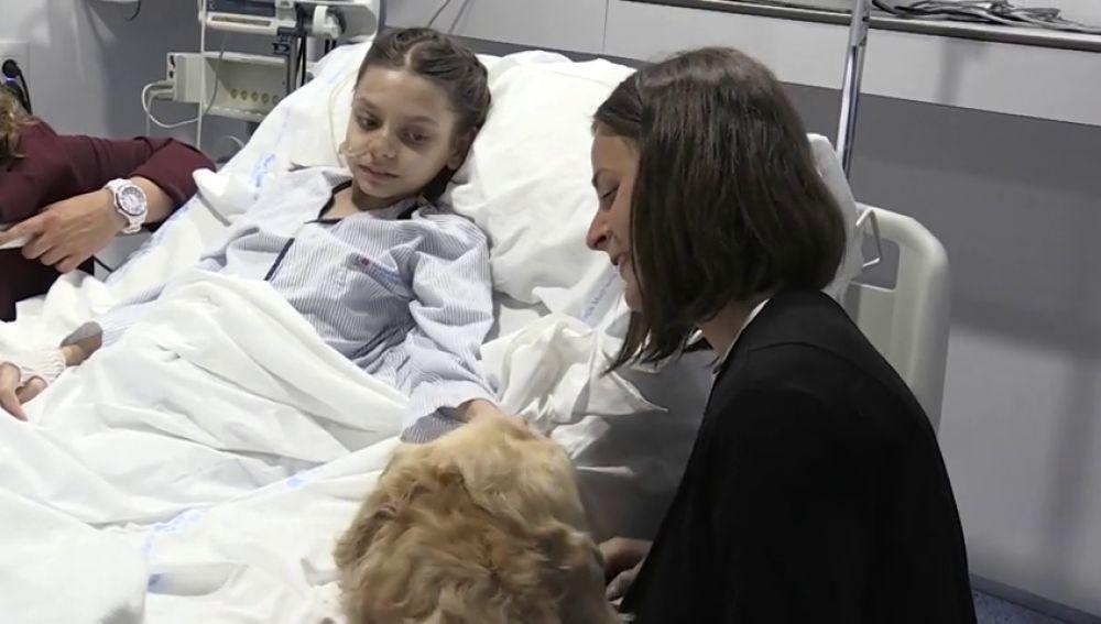 Zenit, el perro 'terapeuta' que logra reducir el dolor de los niños ingresados en la UCI