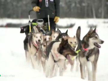 Denuncian a uno de los mejores 'mushers' por maltrato animal tras gritar a sus perros