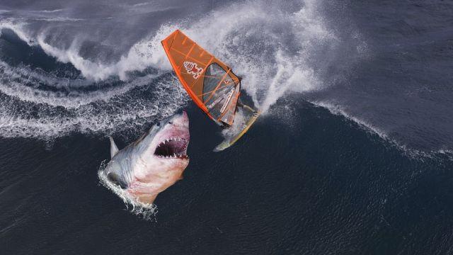 Tiburón (Archivo)