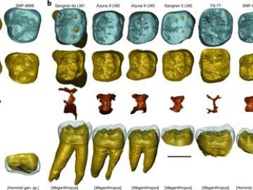 Fósiles atribuidos a un humano ancestral corresponden a un nuevo simio