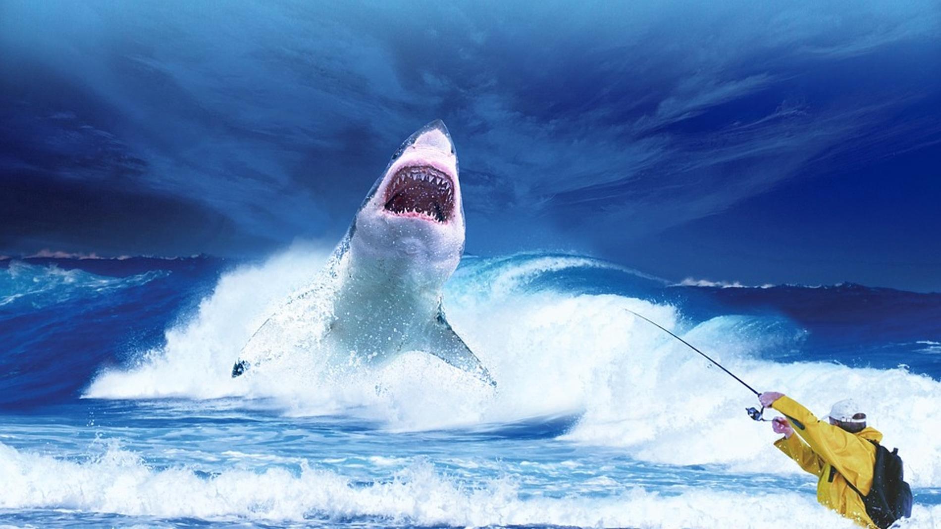 Pescando un tiburón