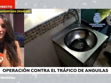 Intervienen más de 2.500 anguilas protegidas en locales de Usera y una nave industrial de Cobo Calleja (Madrid)