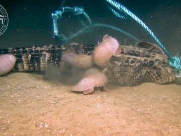 Caimán en el fondo del mar