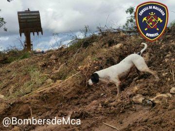 Imágenes de Perry en una de las labores de rescate / Twitter @BombersdeMca