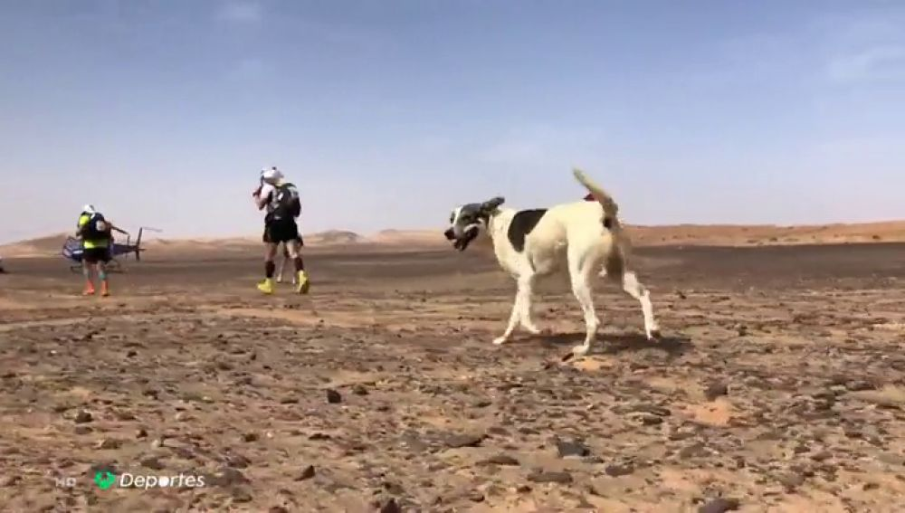 'Cactus', el perro maratoniano: recorre 200 kilómetros por el desierto en cinco días