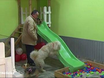 Abren un bar dónde se podrán celebrar 'perricumples', fiestas de cumpleaños para perros