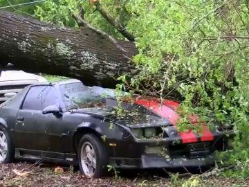 Mueren dos niños tras caer un árbol sobre el coche en el que viajaban