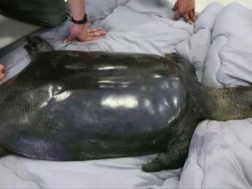 Muere una de las tortugas más raras del mundo en un zoológico de China